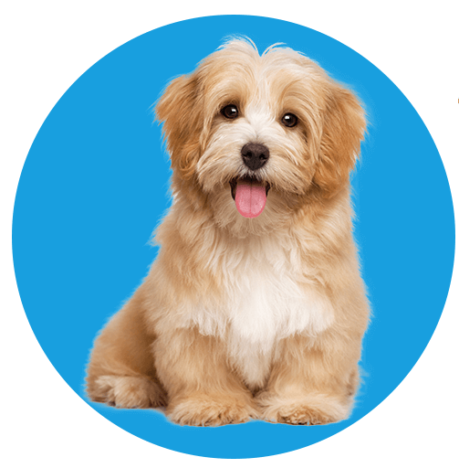 The Puppy Store in Saratoga Springs, Utah Favicon